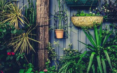 Jeune pousse en jardinage : par où commencer ?